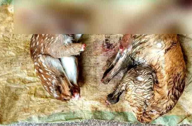 syed-zameer-arrested-selling-beer-rabbit-meat-hyderabad-news-more-dkoding