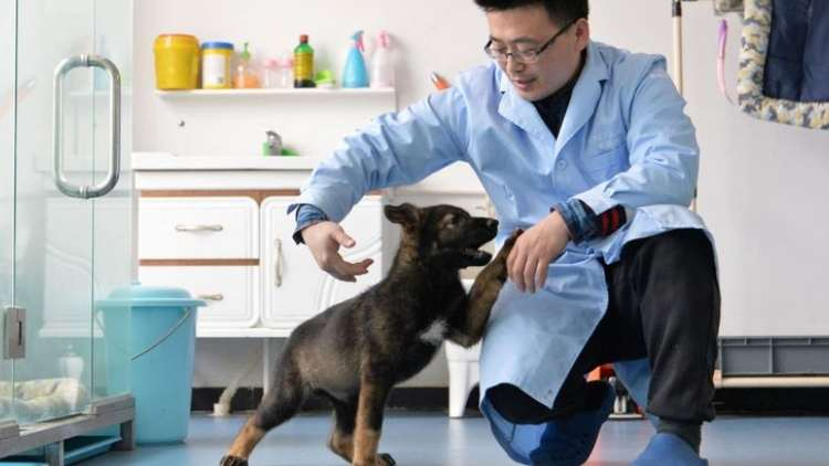 China-Clones-Police-Dog-to-reduce-training-costs-Features-DKODING