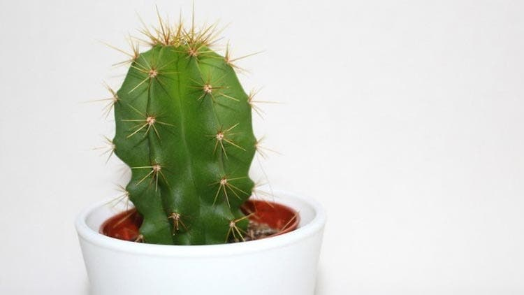 cactus-water-health-and-fitness-lifestyle-DKODING