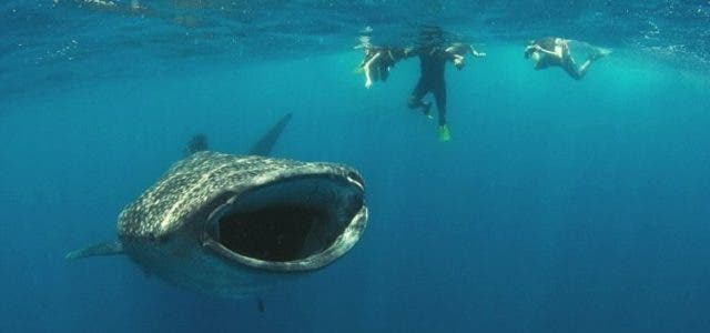 diver-come-back-alive-from-whales-mouth-features-DKODING