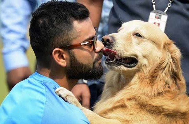 virat-kohli-rcb-to-make-matches-pet-friendly-at-Chinnaswamy-stadium-cricket-sports-DKODING