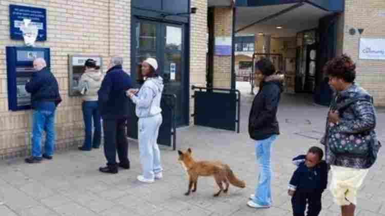 Fox-Is-The-Example-Of-ATM-Turning-Anytime-Meat-Machine-Trernding-Today-DKODING
