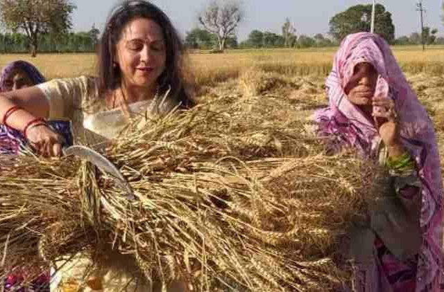 hema-malini-bjp-full-campaign-mode-on-harvesting-wheat-crop-politics-india-DKODING
