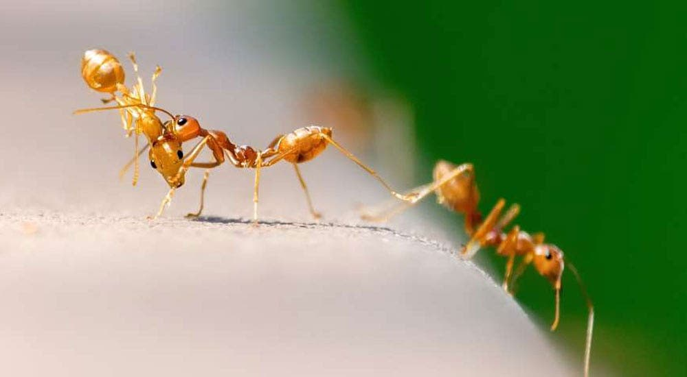 Artificial-Ant-Content-NewsShot-DKODING