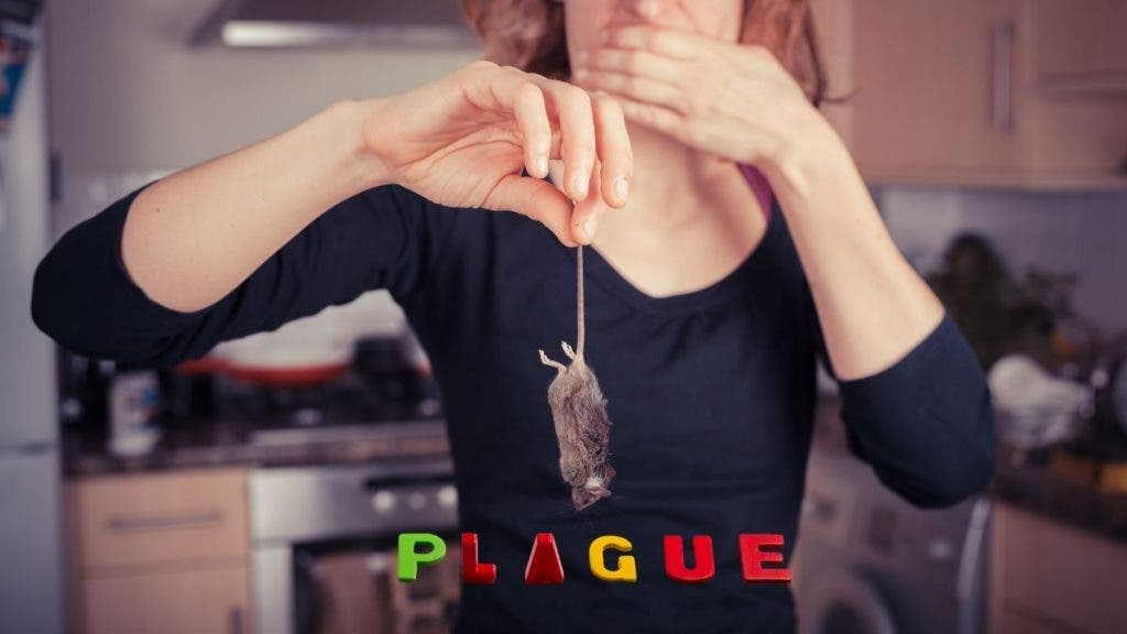 The Australian government plans to get rid of the Mouse plague terrorizing New South Wales residents.