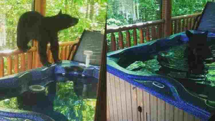Bear-Cubs-Hot-Tub-Features-DKODING