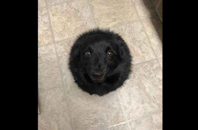 Black-hole-or-a-crater-on-the-moon-Dogs-Trending-Today-DKODING