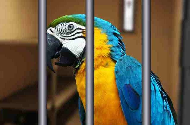Brazilian-Police-Arrested-Lookout-Parrot-Trained-By-Drug-Dealers-To-Alert-Them-Features-DKODING