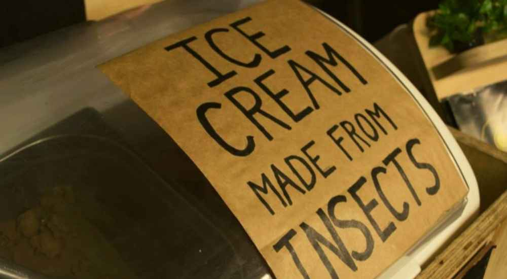 Bug-Ice-Cream-Features-DKODING