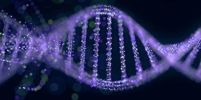 DNA-in-humans