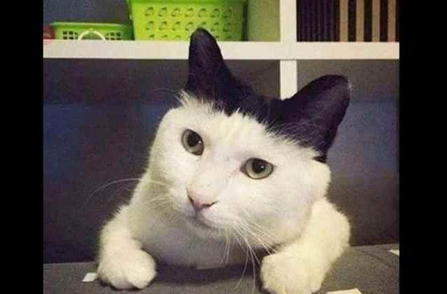 Doesn't-matter-if-you-are-black-or-white-Cat-Trending-Today-DKODING