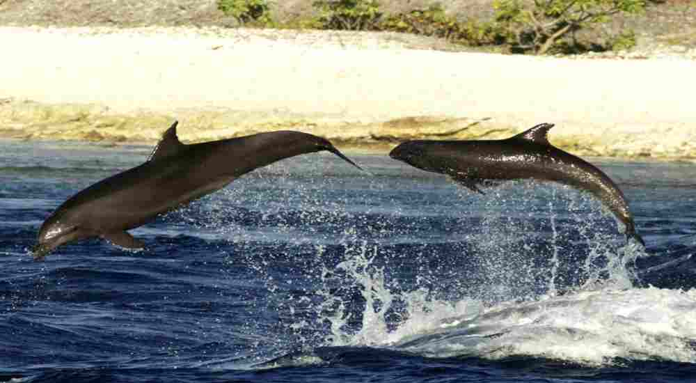 An unusual yet heartwarming bond mother dolphin and baby whale