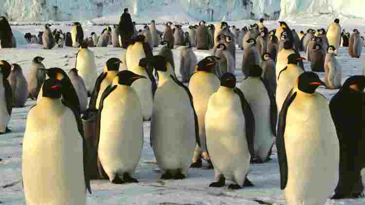 Emperor-Penguin-Colony-Features-DKODING
