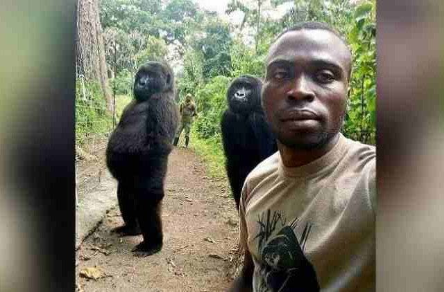 Gorillas-Selfie-Virunga-National-Park-Features-DKODING