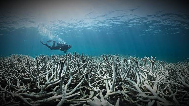 Great-Barrier-Reef-More-News-DKODING