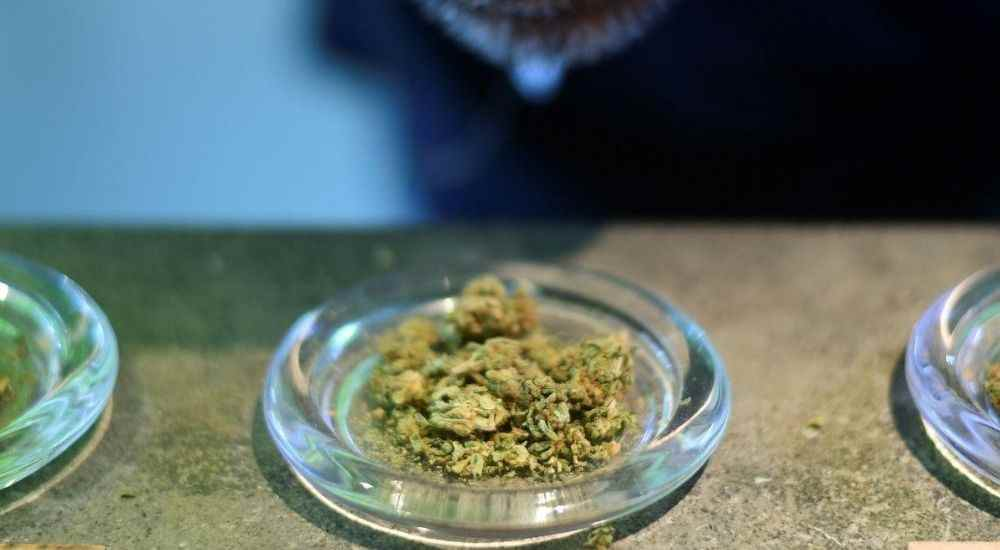 India-First-Weed-Museum-NewsShot-DKODING