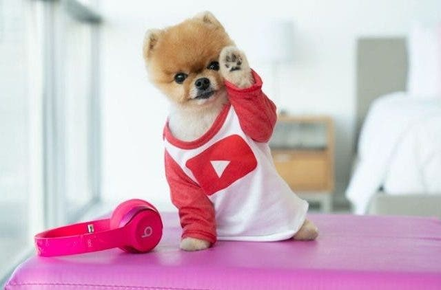 Jiffpom-Influencer-Dog-More-Stories-DKODING
