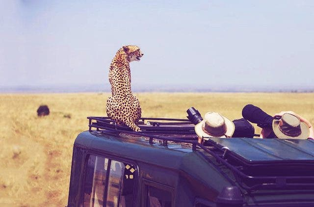 Jungle-safari-cheetah-on-the-jeep-travel-and-food-lifestyle-DKODING