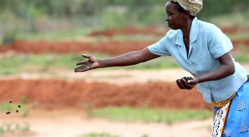 Kenya-Planting-Trees-With-Special-Seed-Balls-NewsShot-DKODING