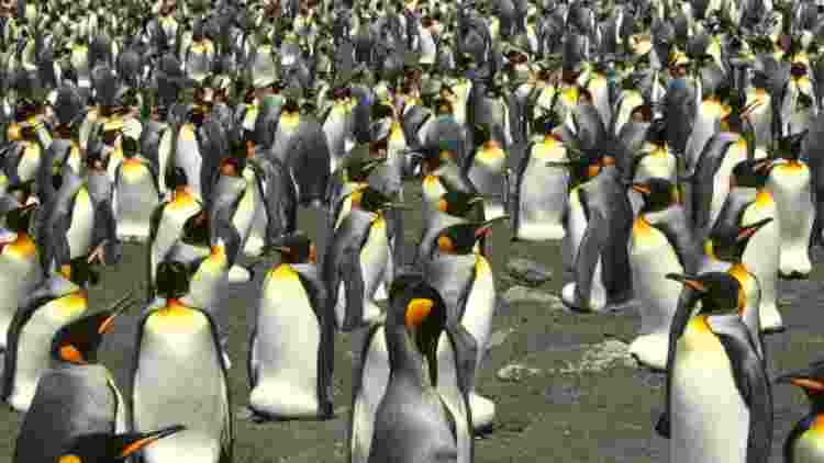 Largest-Emperor-Penguin-Colony-Features-DKODING