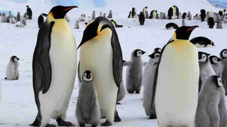 Penguin-Colony-Features-DKODING