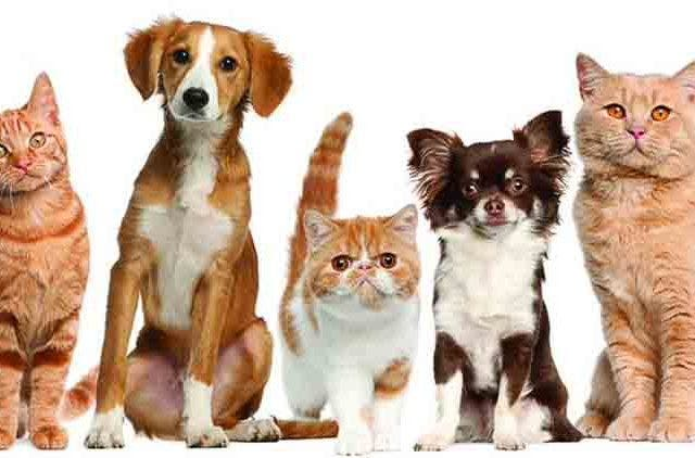 Pets-Owner-Unware-About-Pets-Blood-Donation-Videos-DKODING