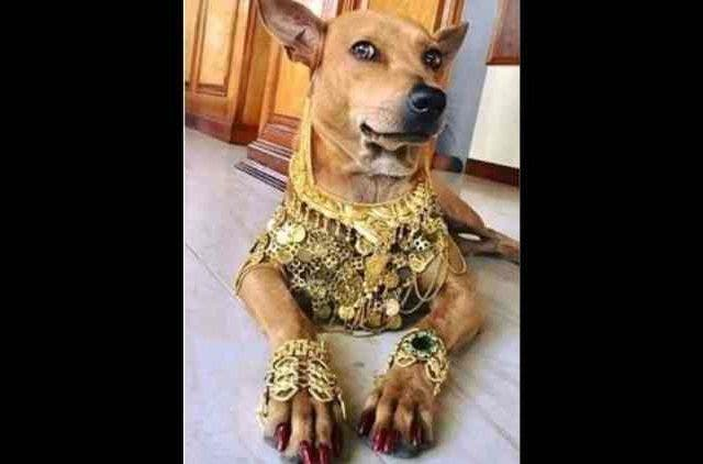 Puppy-Lahiri-Dog-inspired by Bappi-Lahiri-Trending-Today-DKODING