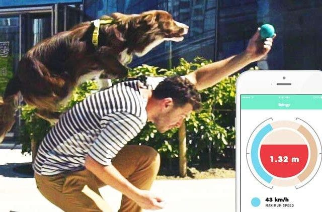 Smart-Toy-For-your-dog-Bringy-NewsShot-DKODING