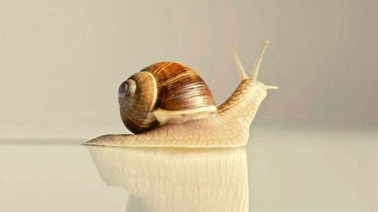 Snail-Slime-Beauty-Facial-Fashion-Beauty-Lifestyle-DKODING