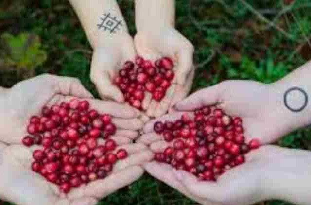 Super-Fruit-US-Cranberry-Celebrates-Womanhood-Companies-Businness-DKODING