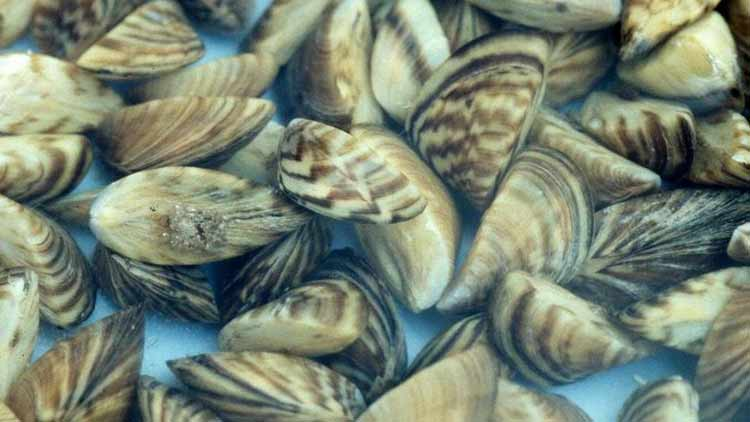 Super-Mussels-The-Key-to-future-water-filtration-NewsShot-DKODING