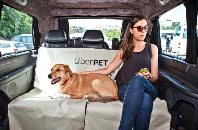 Uber-Pet-Lover-Good-News-Companies-Business-DKODING