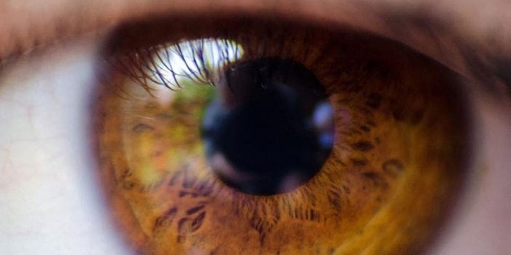 Visual Cortex: The key to vision driven by Maths-NewsShot-DKODING