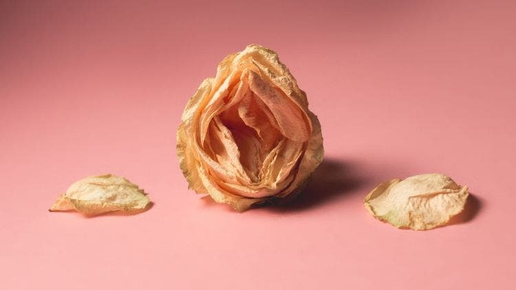 7 Things You Don't Know About Your Vulva