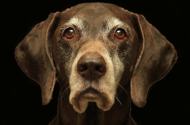 beloved-Doggo-senior-Dog-problems-be-The-Best-Pet-Keeper-DKODING