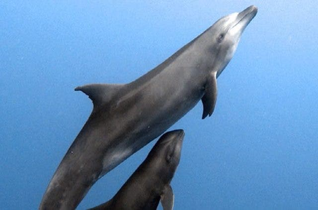 Dolphin-Adopts-Whale-NewsShot-DKODING