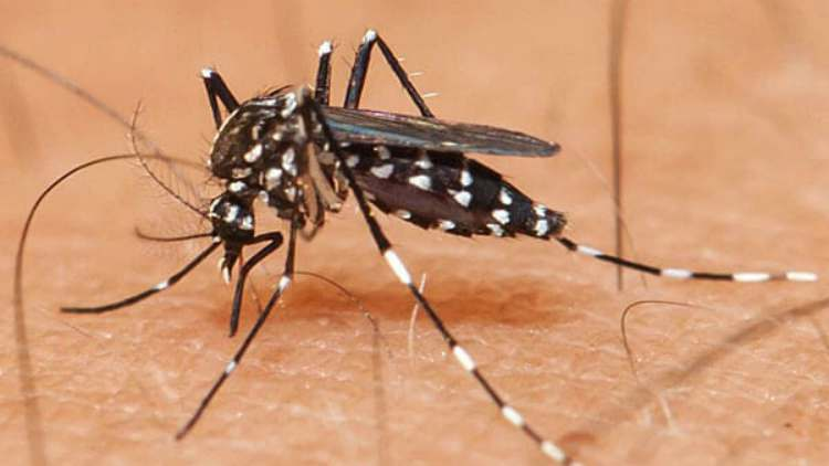 haryana-surge-in-dengue-cases-More-News-DKODING